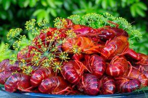 Crayfish with Dill (Kraftor med dill)