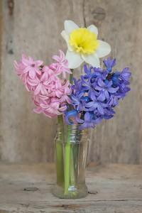 flowers-1355169_960_720