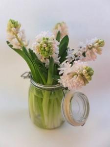 hyacinth-2008811_960_720