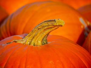 pumpkin-2762784_960_720